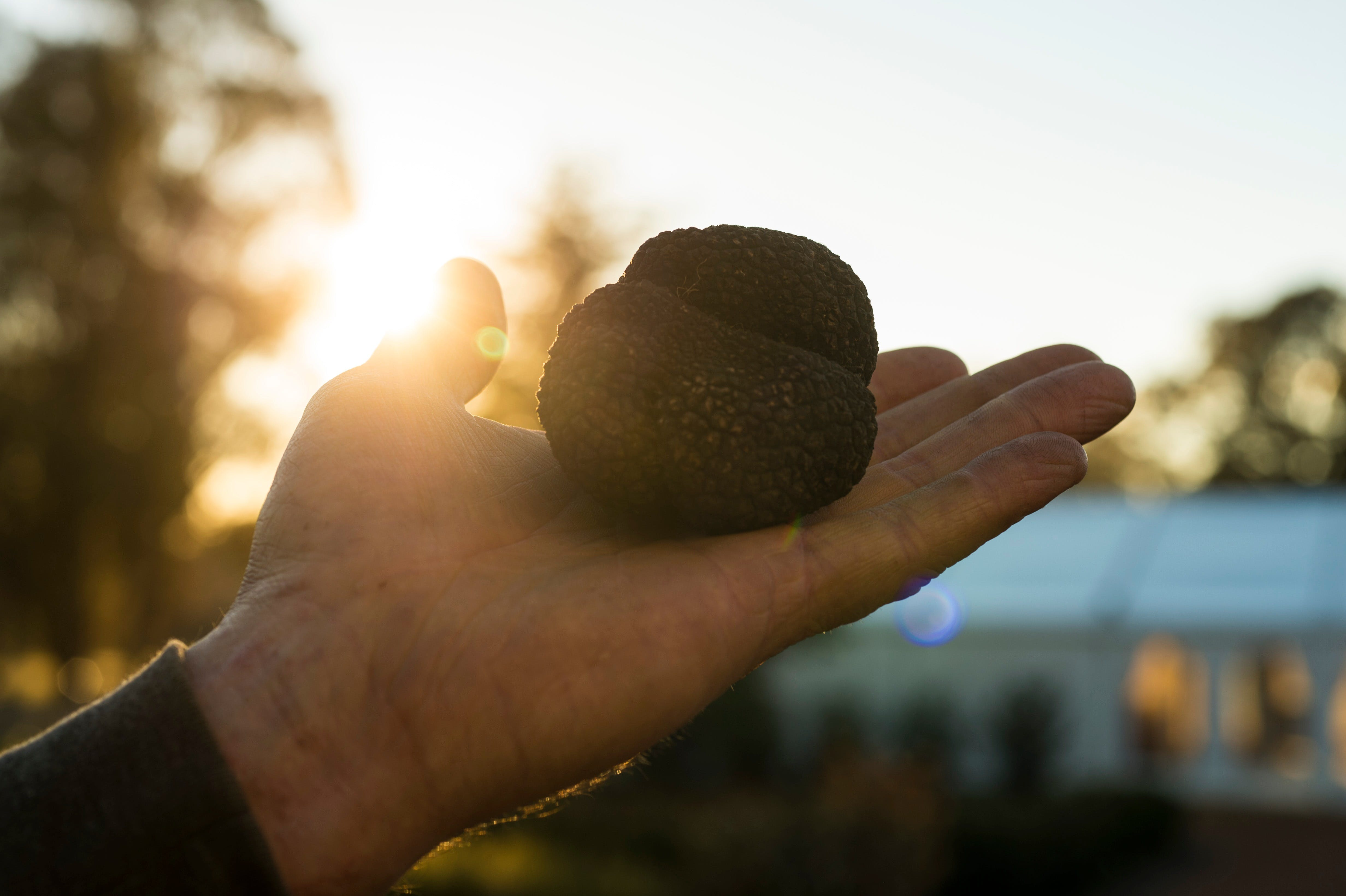 The Truffle Festival - Canberra Region